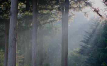 林業とクロモジ